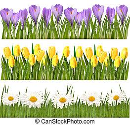 Fresh spring and flower borders