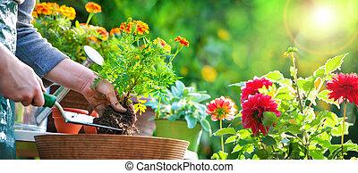 Gardener planting flowers in pot