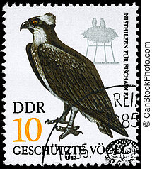 """GDR - CIRCA 1982: A Stamp shows image of a Fish Hawk from the series """"Protected birds"""", circa 1982"""