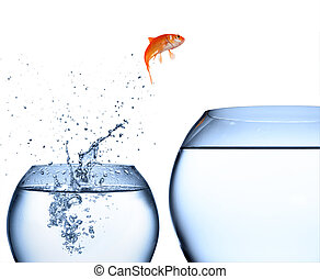 goldfish jumping out of the water - improvement concept