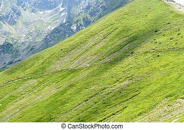 Green alp in Tatra Mountains, Poland.