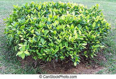 Green bush