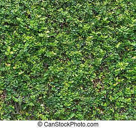 Green Bush. Seamless Tileable Texture
