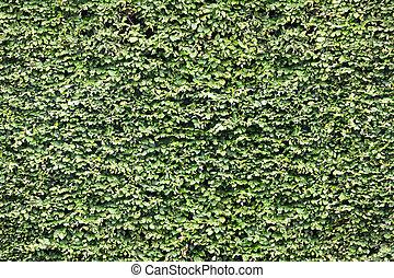 Green leaf wall. Seamless Endless pattern.