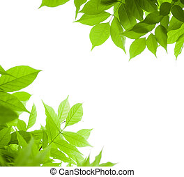 green leaves border for an angle of page over a white background - wisteria leaf