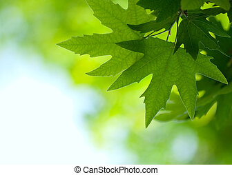 green leaves, shallow focus