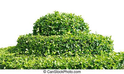 shrub on white