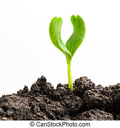 Growing green plant on white background