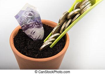 growing money in pot