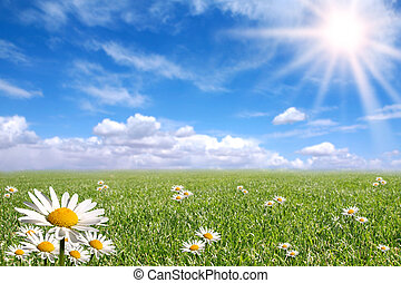 Green Grass, Blue Sky, and Daisy Landscape