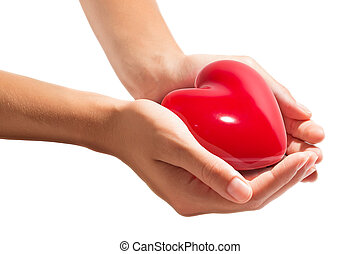 heart in hands - isolated on white