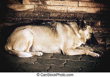 Heavyweight dog sleeping
