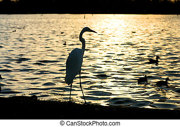 Heron silhouette over water at sunset