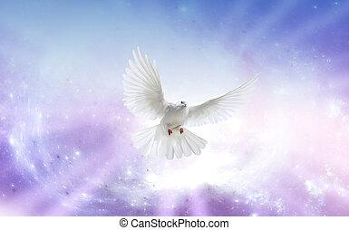 White dove in a blue purple sky, symbol of faith