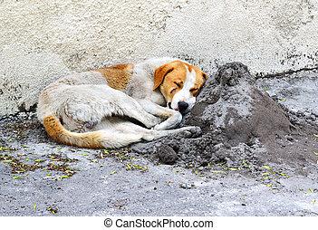 homeless sleeping dog in the street