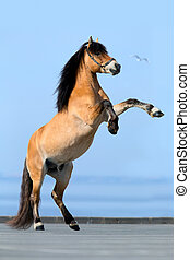 Horse reared on blue background.