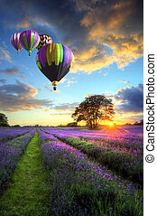 Beautiful image of stunning sunset with atmospheric clouds and sky over vibrant ripe lavender fields in English countryside landscape with hot air balloons flying high
