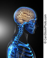 Human Brain Medical Scan