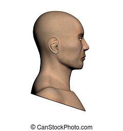 Human head - Side view
