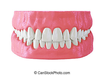 human jaw with straight white teeth, correct bite, 3d render