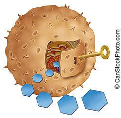 insulin key