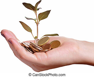 Hand holding a pile of coins and a small plant sprouting from there