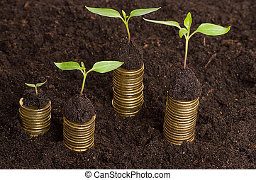 Golden coins in soil with young plant. Money growth concept.