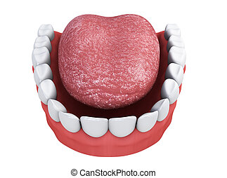 jaw with teeth and tongue on a white background 3d render