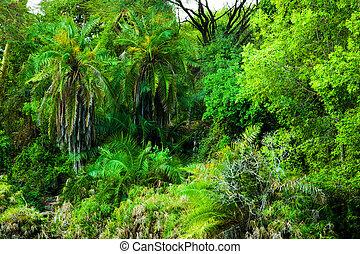 Jungle, bush trees and plants background in Africa. Tsavo West, Kenya