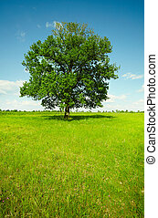 Landscape - field with oak