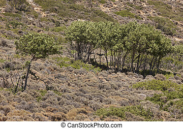 Landscape with trees and bushes in Crete. Greece