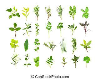 Herb leaf selection of bergamot, golden marjoram, rosemary, silver thyme, lavender, variegated sage, basil, chocolate mint, hyssop, oregano, flat leaved parsley , curly leaved parsley, sage, purple sage, feverfew, comfrey, coriander, golden thyme, chives, golden thyme, bay, tarragon, catmint, lemon ...