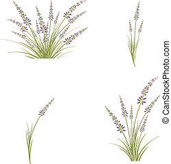 Lavender Flower Set