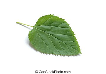 Isolated green leaf