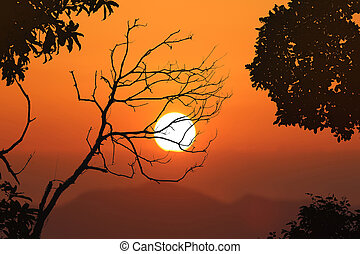 Leafless trees and red sky sunset background