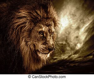 Lion against stormy sky
