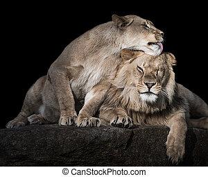 Lion Siblings III