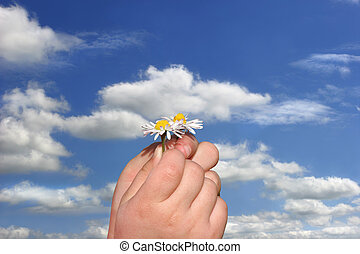 Little Daisies in Little Hands