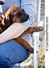 Rhodesian ridgeback puppy sleeping in the lap of the loving owner