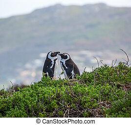 Loving penguin couple