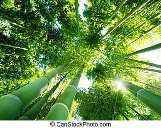 low angle view of green reeds in a bamboo forest