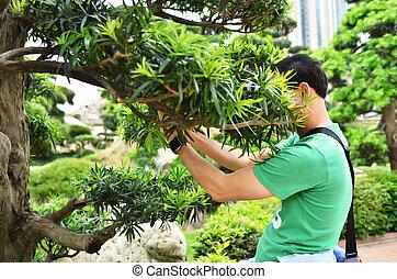 Man hidden face in bush