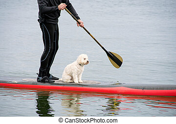 man with dog on paddleboard