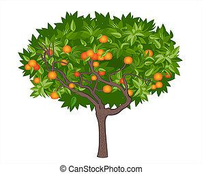 Mandarin tree
