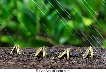 Money growth and rain on top. concept coins in soil
