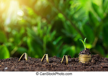 Money growth and seedling on top. concept coins in soil. Yellow tone