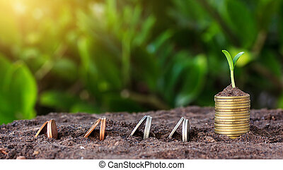 Money growth and seedling on top. concept coins in soil. Yellow tone with sun.