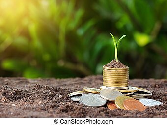Money growth and seedling on top. concept coins in soil. Yellow tone with sun