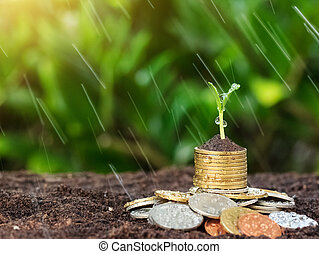 Money growth, seedling and rain on top. concept coins in soil. Yellow tone