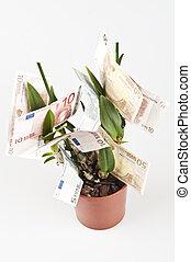 Money in pot